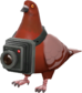 Painted Bird's Eye Viewer 803020.png