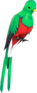 RED Quizzical Quetzal.png