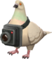 Painted Bird's Eye Viewer C5AF91.png