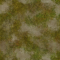 Frontline beachgrass001.png