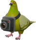 Painted Bird's Eye Viewer 808000.png